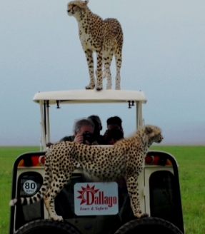 Kenya Camping and Kenya Lodge Safaris